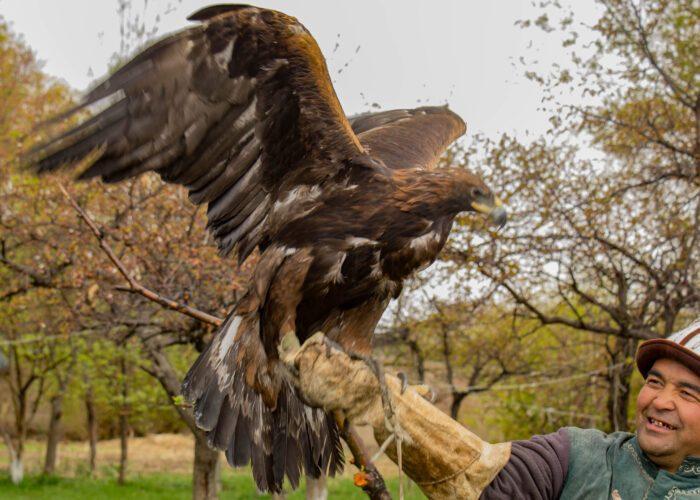 Aquila reale, Kirghizistan