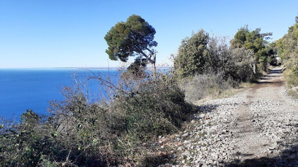 Sentiero della Salvia, Trieste